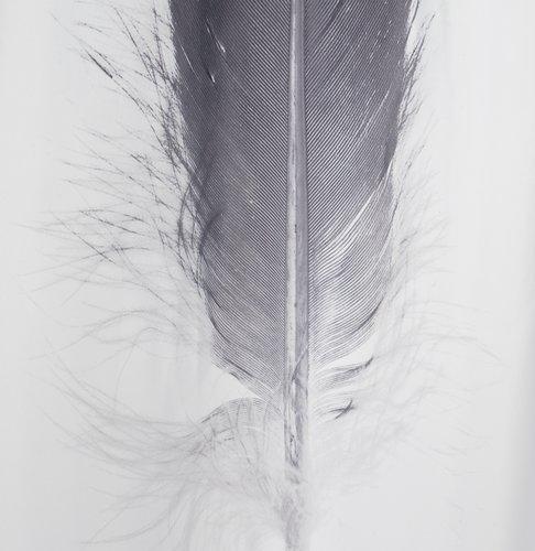 Duschdraperi TOTRA 150x200 svart/vit